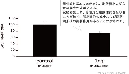 BNLSを添加した後では、脂肪細胞の明らかな減少が確認できる。試験結果より、BNLSは細胞壊死を生じることが無く、脂肪細胞の減少および脂肪滴形成の抑制作用があることが示された。