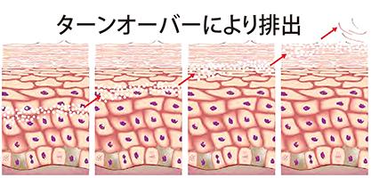メディカルエピファンデーションの色素はターンオーバーにより排出